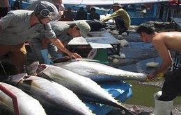 Sản lượng thủy sản tăng, ngư dân phấn khởi thu lãi đầu năm