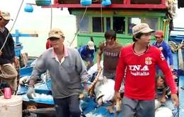 Nhật Bản xúc tiến thu mua, chế biến cá ngừ đại dương tại Phú Yên