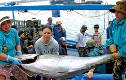 25 tàu cá Bình Định nhận ngư cụ khai thác cá ngừ của Nhật Bản