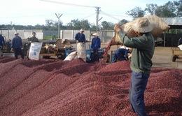 Cơ hội hợp tác phát triển ngành hàng cà phê