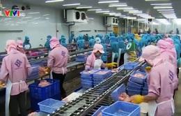 Lùi thời gian thực hiện quy định mới về xuất khẩu cá tra