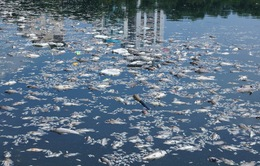 Cá chết nổi trắng kênh Nhiêu Lộc - Thị Nghè