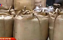Xuất khẩu cà phê sụt giảm hơn 30%