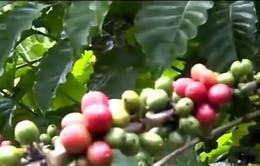Nông sản Việt Nam: Xuất khẩu giảm - Nhập khẩu tăng