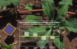 Hệ thống cảm biến làm vườn thông minh