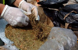 Bolivia bắt giữ 27 tấn lá coca vụn để chế biến cocaine