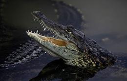 Indonesia muốn dùng cá sấu... 'canh gác' nhà tù