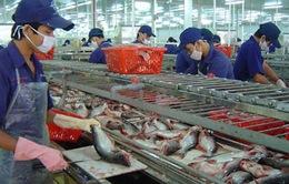 Đa dạng sản phẩm tinh chế cá tra để xuất khẩu