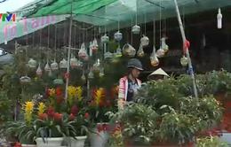 TP.HCM: Nhiều trái cây độc, lạ kén người mua dịp Tết