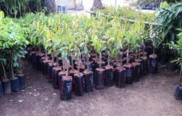 Xử phạt cơ sở sản xuất, kinh doanh giống cây trồng kém chất lượng