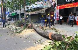 TP.HCM: Cành cây bất ngờ gãy đổ, 2 người bị thương