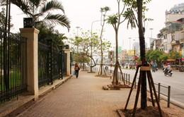 Sở Xây dựng Hà Nội khẳng định cây trồng thay thế là vàng tâm