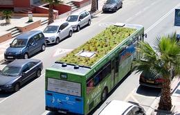 Trồng cây xanhtrên… nóc xe buýt