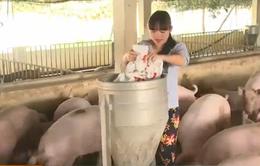 Sử dụng chất cấm ảnh hưởng lớn tới ngành chăn nuôi