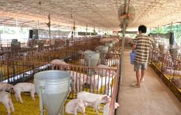 Nâng cao nhận thức nông hộ nhỏ để cạnh tranh khi hội nhập