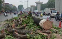 Sở Xây dựng Hà Nộitrả lời báo chí 21 câu hỏi về dự án chặt cây xanh