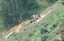 Cao Bằng: Ngang nhiên phá rừng, khai thác gỗ trái phép