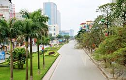 Hà Nội: Chặt hạ, di chuyển 63 cây xanh trên đường Trần Duy Hưng