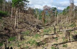 Suy giảm diện tích rừng ở Tây Nguyên