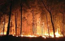 Cháy rừng tại miền Nam Australia: Khó khăn trong công tác cứu hộ