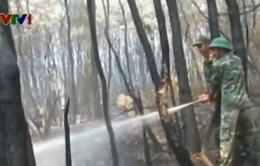 Cháy rụi gần 50ha rừng tràm tại Long An