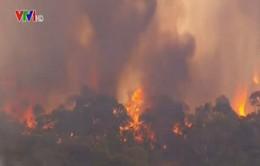 Cháy rừng vượt tầm kiểm soát tại Australia