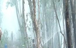 An Giang: Cháy lớn thiêu rụi hơn 20 ha rừng tràm