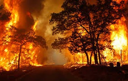 Hỗ trợ 185 tỷ đồng phòng, chống cháy rừng