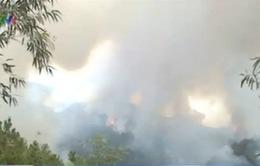Vụ cháy rừng thông tại Thanh Hóa đã được khống chế