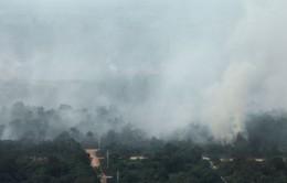 Indonesia đình chỉ các công ty gây cháy rừng