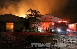 Bình Dương: Đã dập tắt hoàn toàn vụ cháy kho bông 300 tấn