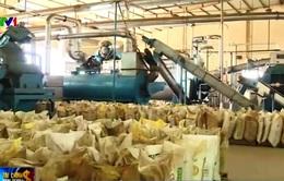 Bà Rịa - Vũng Tàu đóng cửa các nhà máy chế biến bột cá