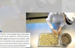 Chế biến côn trùng - ngành kinh doanh đầy cơ hội tại châu Âu