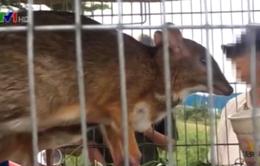 TP.HCM: Công khai buôn bán động vật hoang dã trên phố