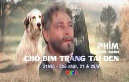 """Phim cuối tuần """"Chó Bim trắng tai đen"""" (21h40, 21/6 & 28/6, VTV1)"""