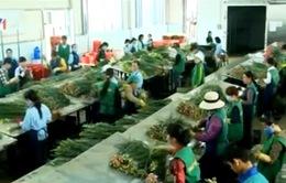 Đầu tư 164 tỷ đồng xây chợ hoa đầu mối Lâm Đồng