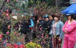 Rực rỡ sắc màu chợ hoa Xuân Hàng Lược