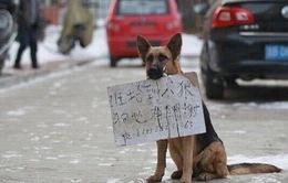 Chó mẹ dùng bảng thông báo tìm chó con bị lạc
