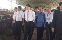 Chủ tịch nước thăm mô hình sản xuất nông nghiệp quy mô lớn