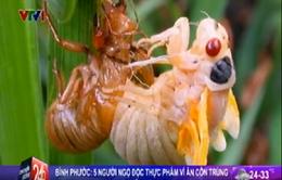 Bình Phước: 5 người ngộ độc vì ăn côn trùng