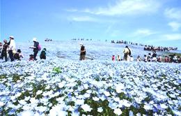 Ibaraki - Vẻ đẹp quyến rũ của đất nước Nhật Bản (P1)