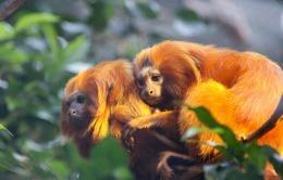 Sở thú Copenhagen lên chiến dịch giảm cân cho động vật