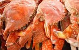 3 ngư dân tử vong trên biển sau khi ăn ốc, ghẹ luộc