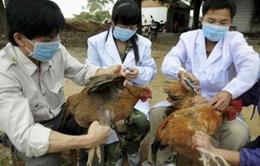 Cúm A/H5N6 bùng phát tại nhiều địa phương