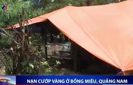 Bùng phát nạn cướp vàng ở Bồng Miêu, Quảng Nam
