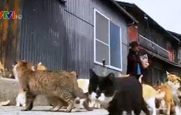 Ấn tượng Đảo Mèo ở đất nước Nhật Bản
