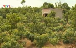 TT-Huế: Đưa hơn 137 ha đất chưa sử dụng vào sản xuất