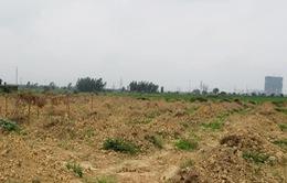 Tái diễn tình trạng biến đất trồng lúa thành đất ở tại Gia Lai