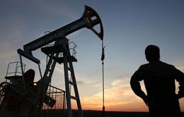 """Giá dầu thô lập """"đáy"""" mới"""