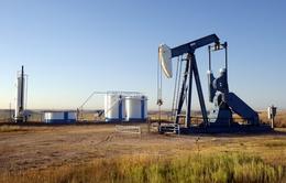 Giá dầu giảm do đồng USD tăng giá